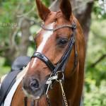 Stallions in NZ for 2015/16 Season