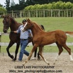 Hanoverian Verband Inspection Tour – reminder