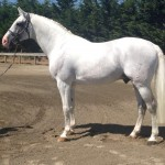 New Licensed and Performance Tested Stallions