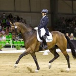 Hanoverian Champions at HOYS 2013