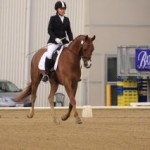 North Island Dressage Champions – The Hanoverians