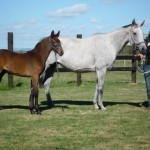 All Talk - premium foal