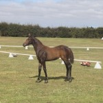 Limelight SW - equal top dressage foal