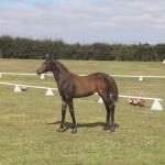 February 2013 tour: Premium Foals