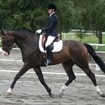 Hanoverians Chosen for NZ Dressage Squads 2013-14