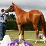 Hanoverian Mare Classification Tour – with Dr Ludwig Christmann
