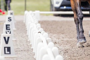 NZHS Success at NI Dressage Champs 2014 Taupo