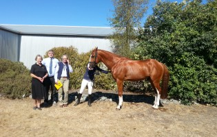 New Stallion Licensed for Hanoverian