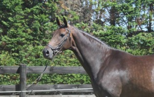 Mare Classifications Report – 2015 Verband Visitor Tour