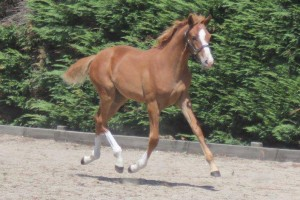 2015 Verband Visitor Tour – Top Foals
