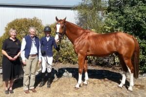 New Stallion Licensed for Hanoverian