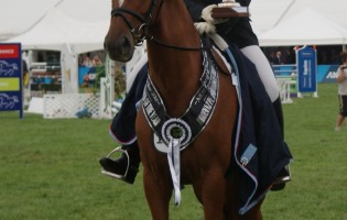 NZ Hanoverian Sash Awards 2015
