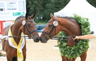 Here's all you need to know about the Hanoverian