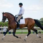 [Fact Box] Stallion Licensing