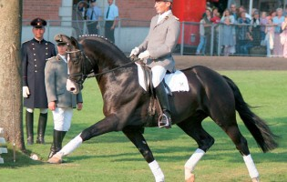 Stallions from IHB and PSI – for 2016  – ORDERS CLOSE ON SUNDAY!!!!!!