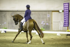 Hanoverian Champions – Horse of the Year Show 2016