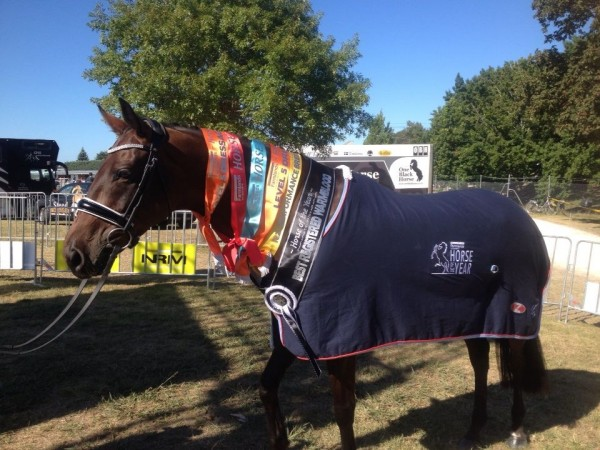 Letty Lei Perf Horse 2016