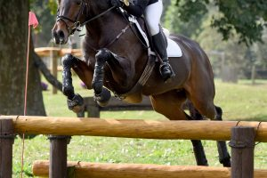 Hanoverians in Jumping and Eventing