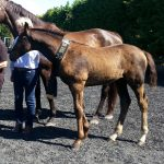 Top Foal Verband Tour 2017