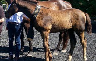 Top Foal Verband Tour 2017