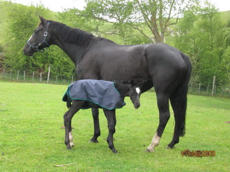 Foaling Your Mare