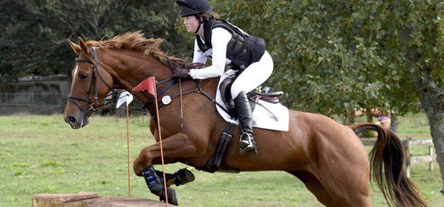 The Hanoverian Horse