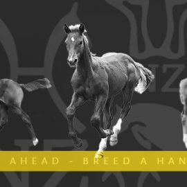 Be Steps Ahead of your competition – Breed a Hanoverian or Rheinlander