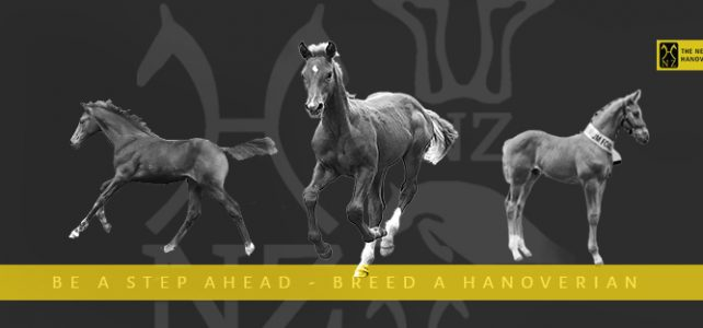 New foal? Planning to breed one? All you need to know about The Breeding Programme