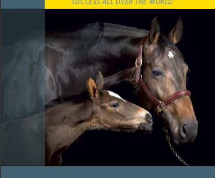 The latest Hanoverian Breeder's Guide is out!