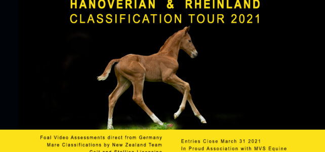 Studbook Classification Tour 2021 – foals by video assessment in Germany