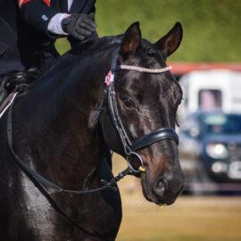 NZ Based Registered Stallions 2021-22 – updated information